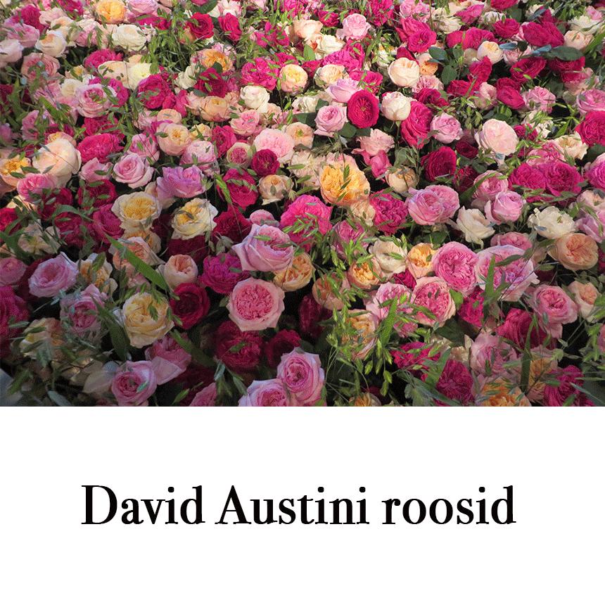 """Suur õnnitluskaart """"David Austini roosid"""" € 2.50"""