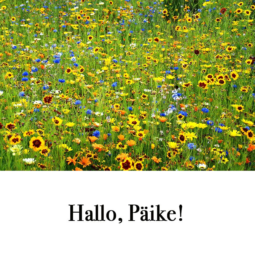 """Suur õnnitluskaart """"Hallo, Päike!"""" € 2.50"""