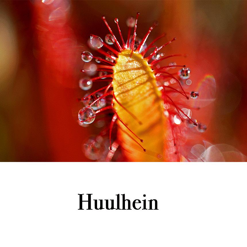 """Suur õnnitluskaart """"Huulhein"""" € 2,50"""