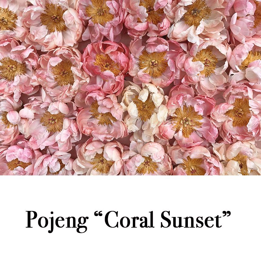 """Suur õnnitluskaart """"Pojeng Coral Sunset"""" € 2.50"""