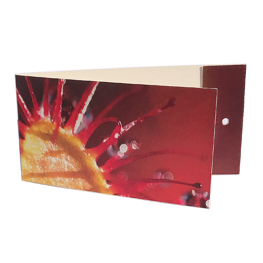 "Väike kaart ehk lillekaart ""Huulhein"" lillekimbule"